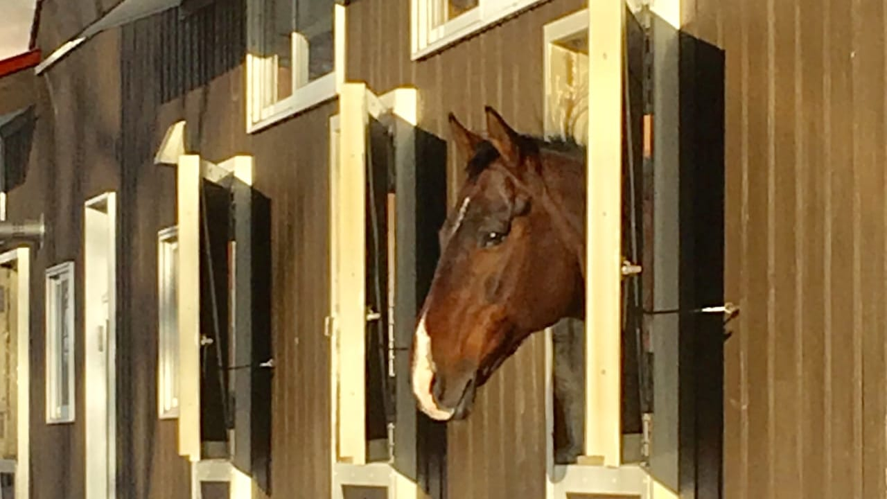 苫小牧ノーザンホースパークの馬