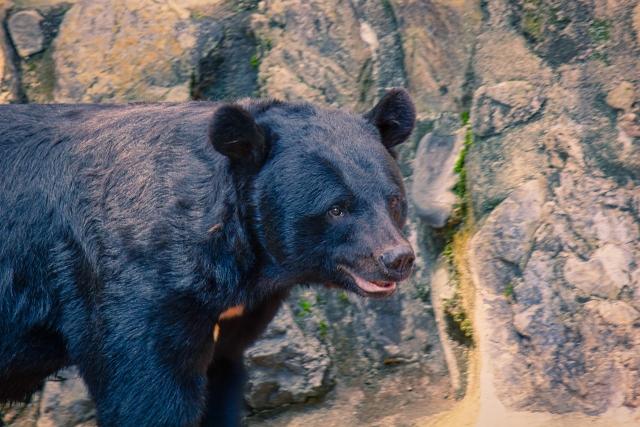 クマのイメージ図