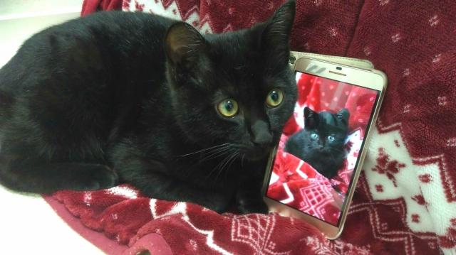 黒猫のイメージ図